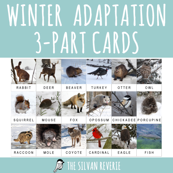 ADAPTATION 3-PART CARDS