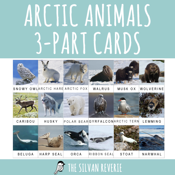 ARCTIC ANIMALS 3-PART CARDS