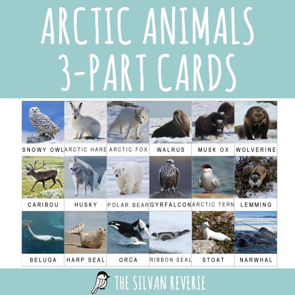 ARCTIC ANIMALS 3-PART CARDS