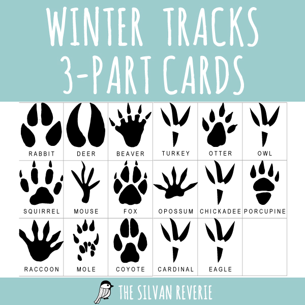 WINTER ANIMAL TRACKS 3-PART CARDS
