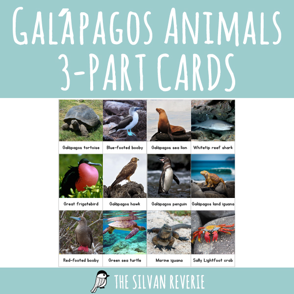 Galapagos Animals 3-PART CARDS