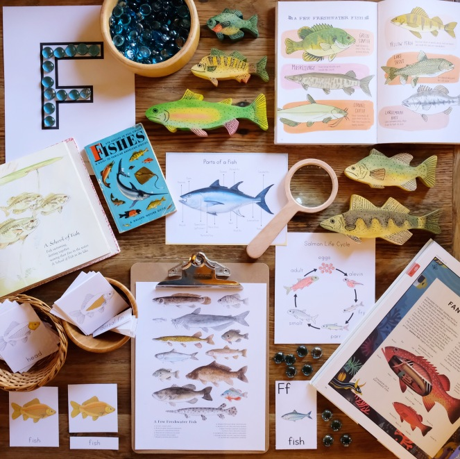 FRESHWATER FISH NATURE STUDY