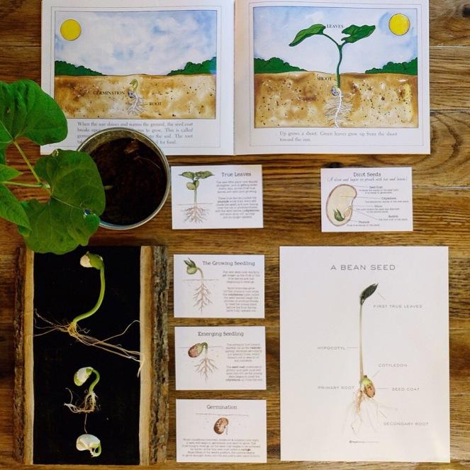 Seeds 2.JPG