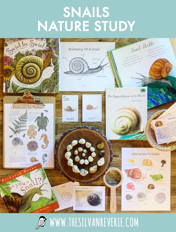 Snails Nature Study - The Silvan Reverie.jpg