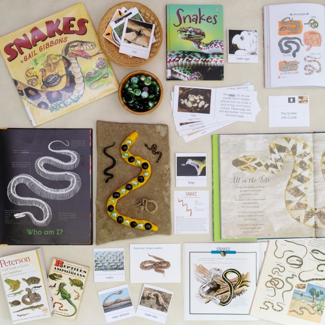 SNAKES NATURE STUDY
