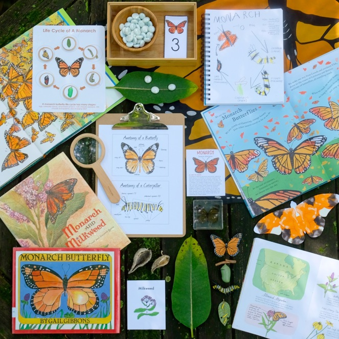 Monarch Butterfly Nature Study