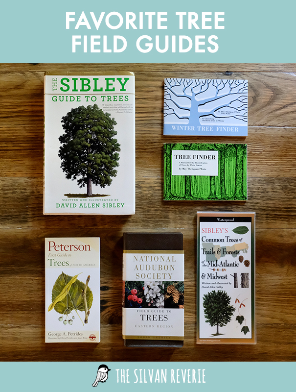 Favorite Tree Field Guides - The Silvan Reverie