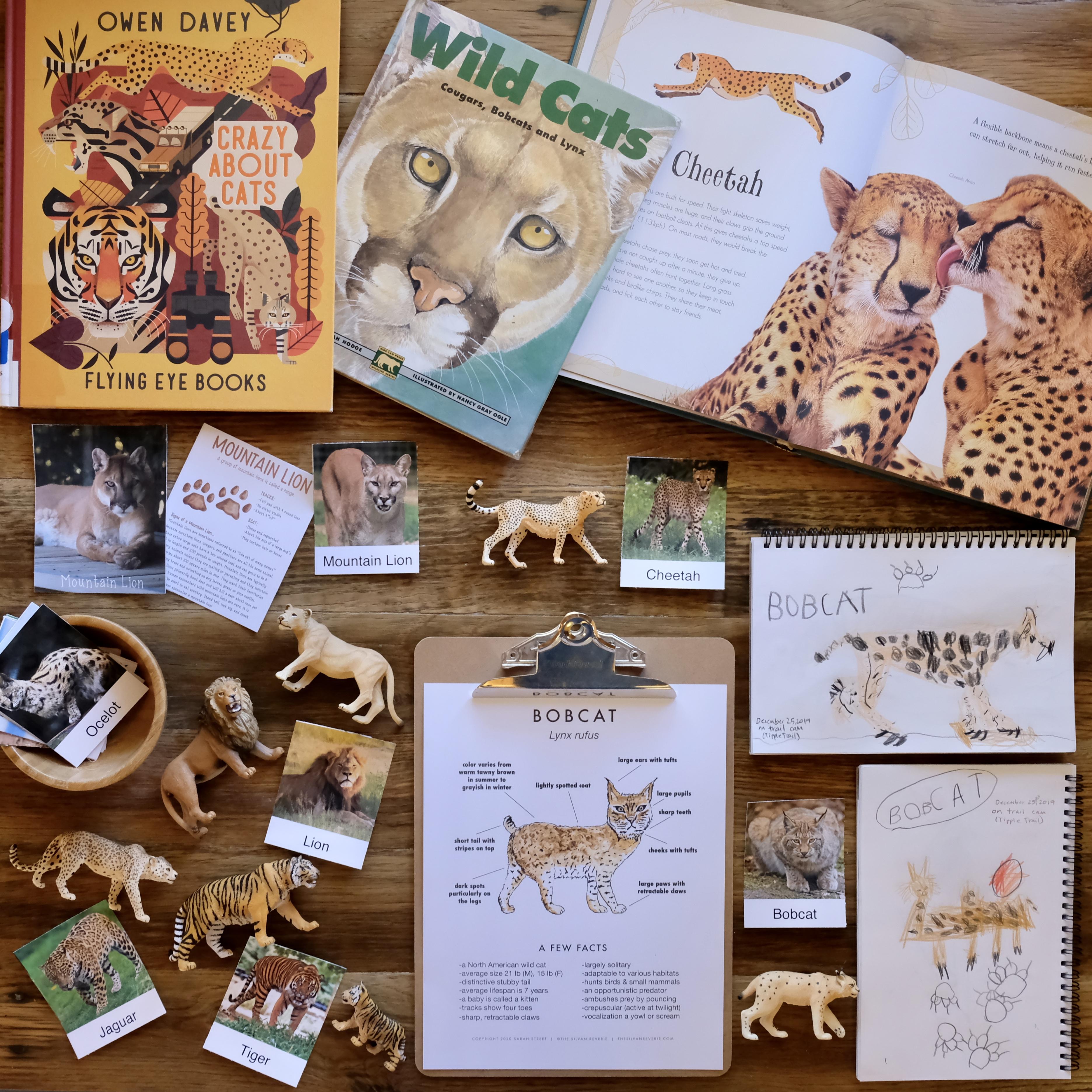 Wild Cats Nature Study