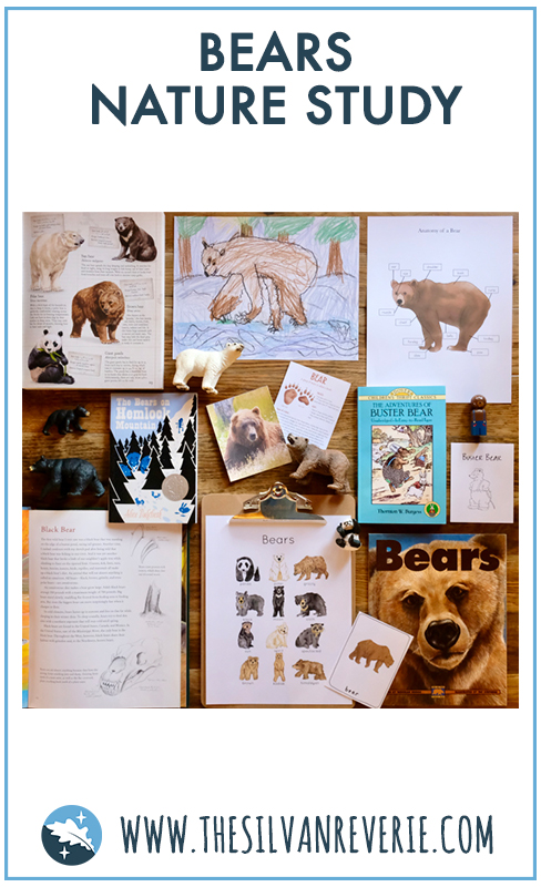 Bears Nature Study - The Silvan Reverie