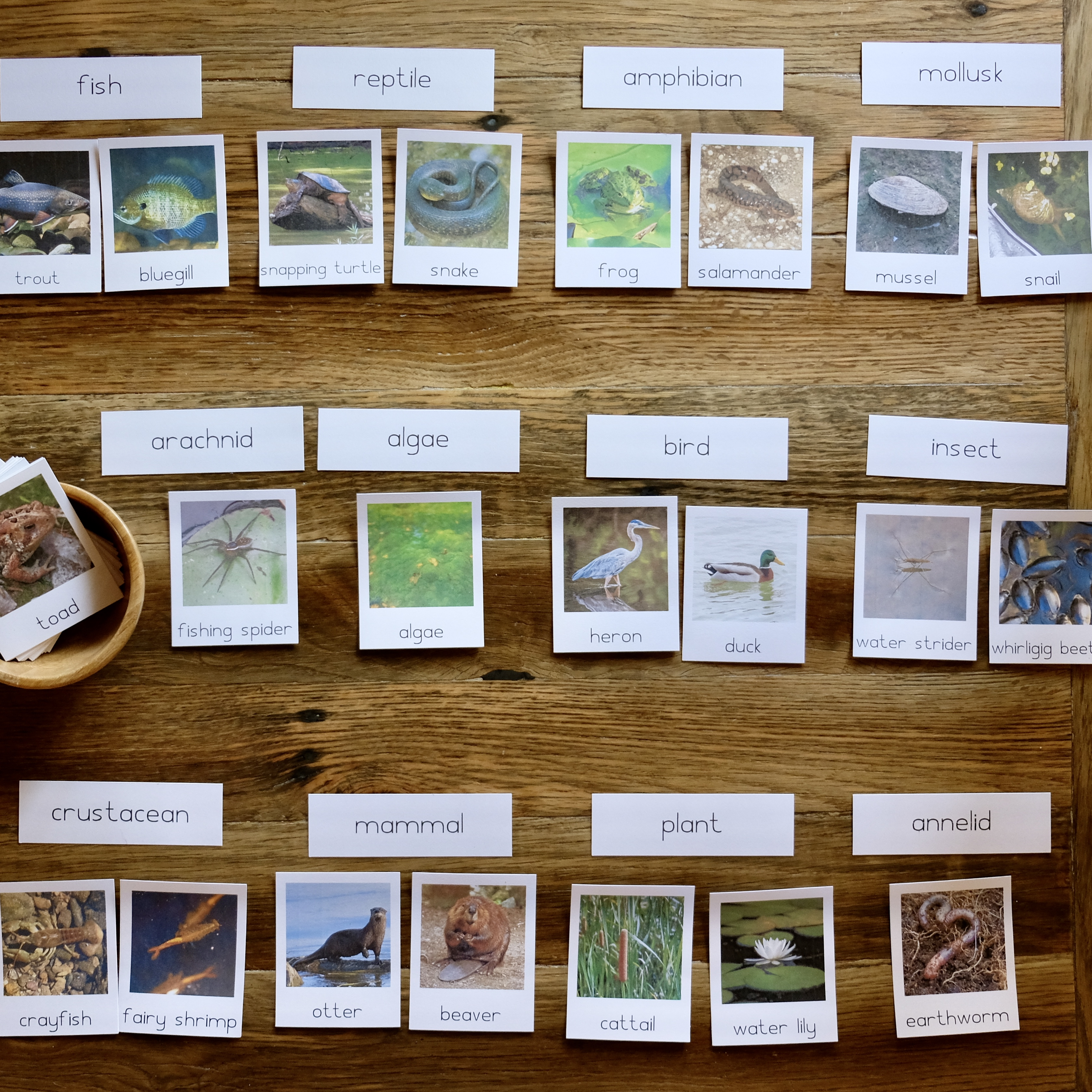 Pond Liife Cards.jpg