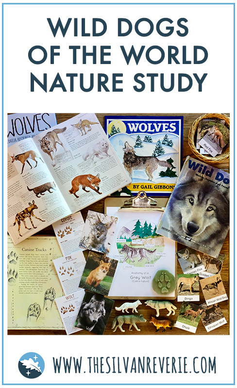 Wild Dogs Nature Study